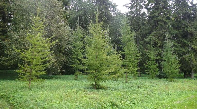 Алла Громова посадила дерево