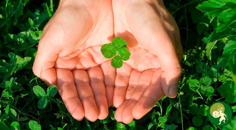 как привлечь удачу в семью